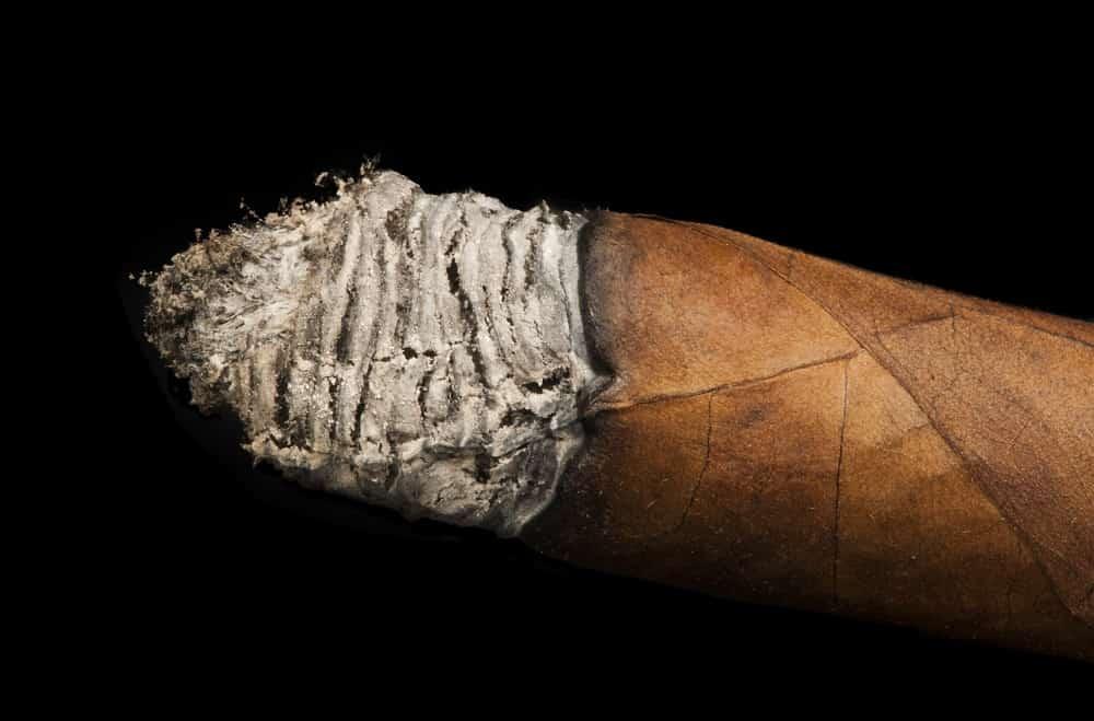 Studio shot cigar